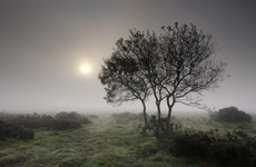 wpid-bushes-in-the-morning-fog.jpg