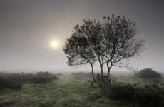 wpid-bushes-in-the-morning-fog.jpg