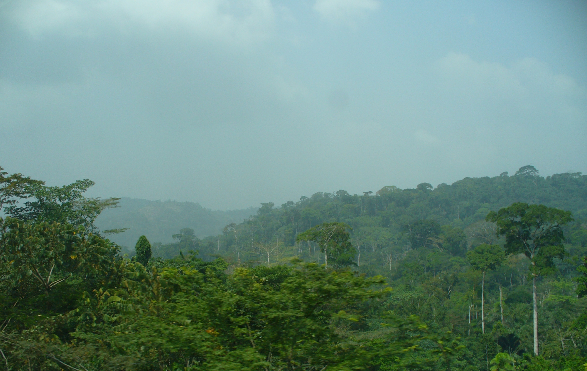wpid-cameroon_rainforest_2.jpg