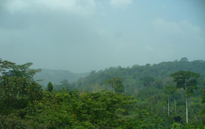wpid-cameroon_rainforest_2.jpg