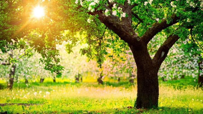 wonderwordz_gardens_14.jpg